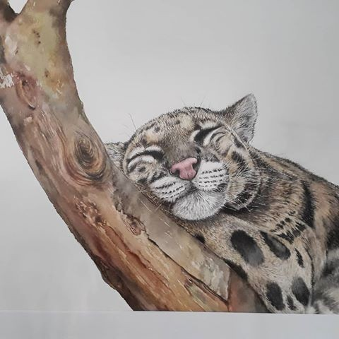 Clouded Leopard Dozing by Linda Latham