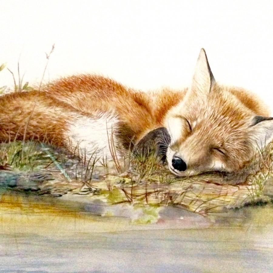 Red Fox by Linda Latham