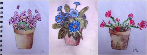 Teodora Totorean - Floral sketches
