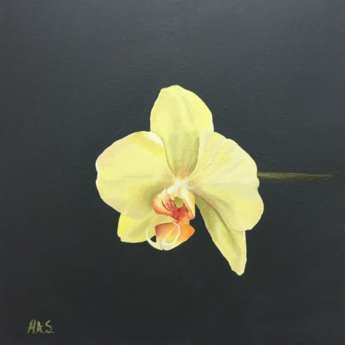 Orchid by Helen Sinfield