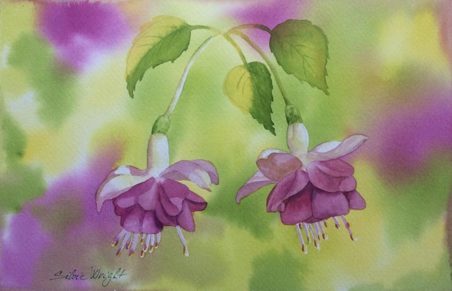 Fuchsias by Silvie Tupa