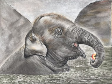 Baby elephant in pastels