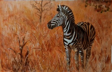 Zebra separated from the herd