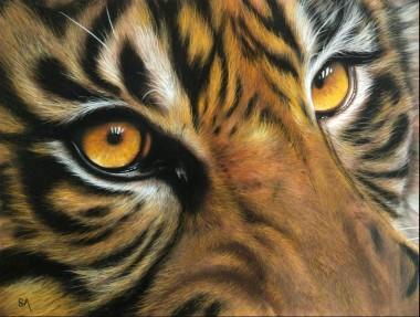 Tiger's Gaze