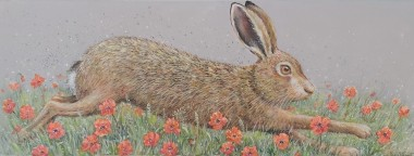 Hare full view