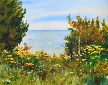 Wildflowers in the Coastal Park Folkestone