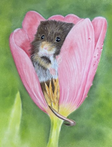 Pastel painting of little harvest mouse inside pink tulip