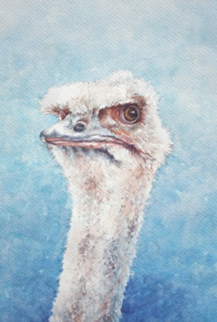 the Look.Ostrich.Humorous look and stare.