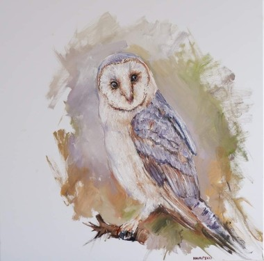 Owl gaze