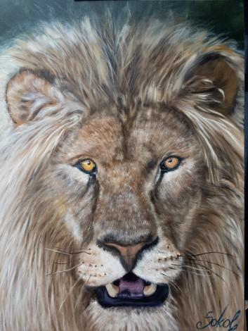 Lionherd