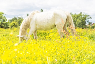 Bowing In The Buttercups