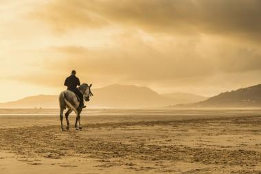 Tarifa Horse
