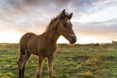 Dorset Horses