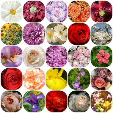A Variety of Flowers