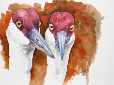 Curious Cranes