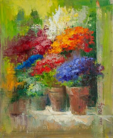 plants, garden, flowers, pots, gardening, home, growing, hobby
