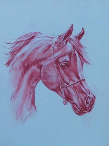 Drawing of Arab Horse