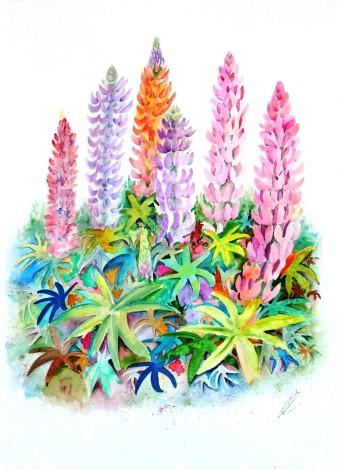 Garden Lupin Flowers