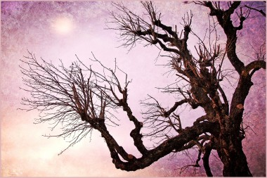 Print of a tree silhouette in a purple sky