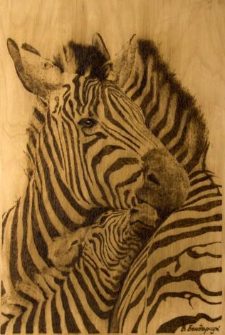 giraffes stripes horse love family