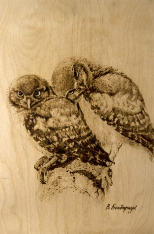 owls birds family kiss love animals