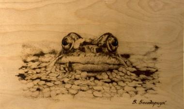 frog water swamp fairy tale