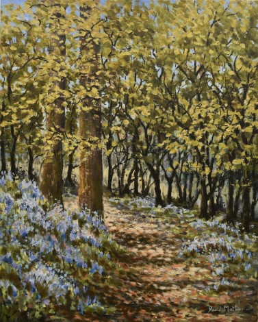 Bluebells at Pentillie oil painting by David Mather