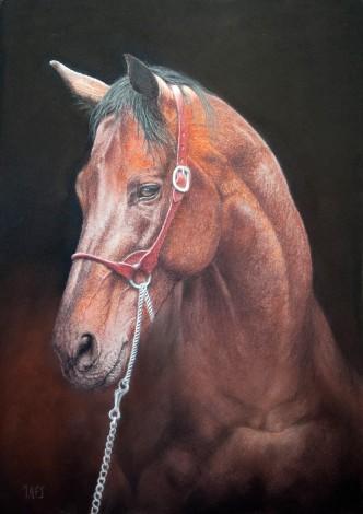 Warmblood horse portrait