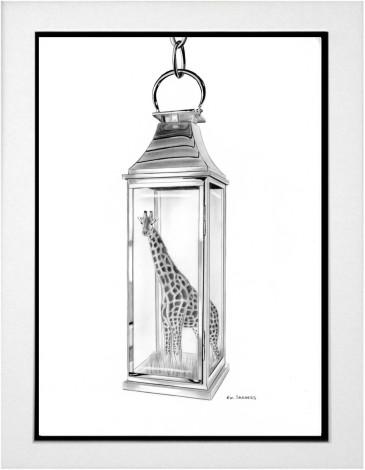 Giraffes A Shining Light in Our World