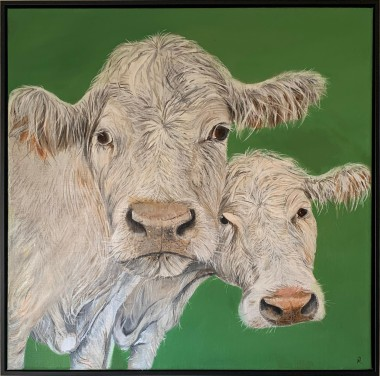 Painting of two Charolais cows on a plain green background.