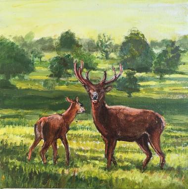 Deer morning Richmond Park