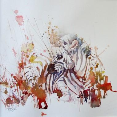 Animal wildlife. African zebra foal