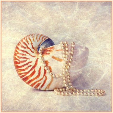 Sea Shell And Pearls