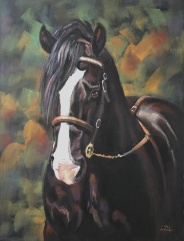 Black Welsh Cob Stallion