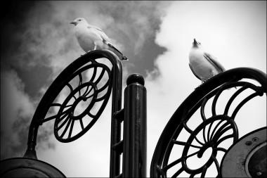 Sea Gulls In Lyme Regis