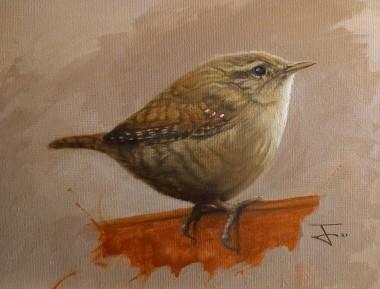 The chubby Wren ( a portrait)