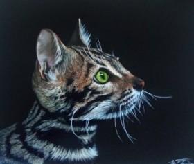 The beautiful cat
