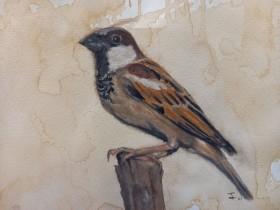 The Sparrow 1
