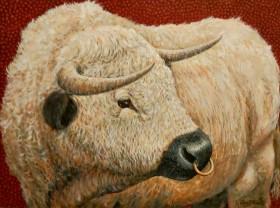 Bull full view