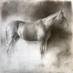 Horse (wp-76)