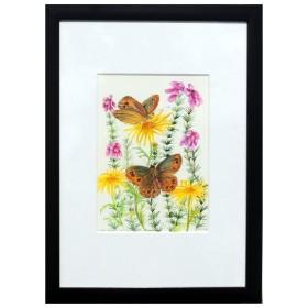 'Scotch Argus Butterflies