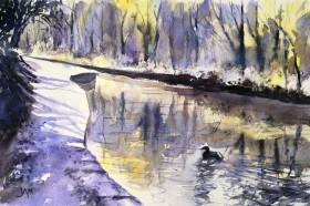 water reflections moorhen