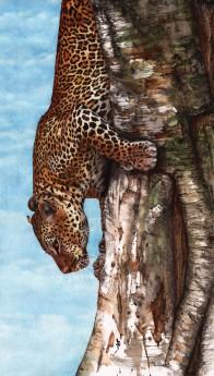 Breaking Cover Leopard