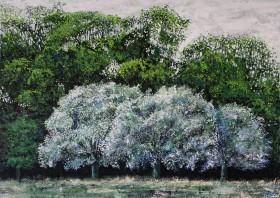 Bushy Park Trees