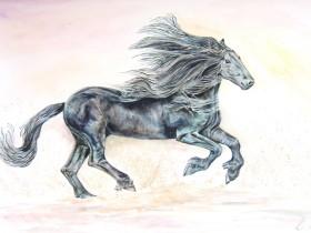 Fine Black Horse