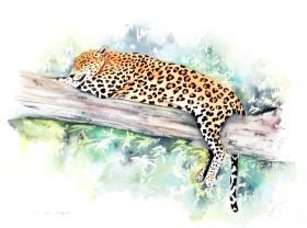 Sri Lankan Leopard. Large Cat.Watercolour