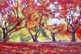 Dancing Acers, Acer trees, Westonbirt arboretum.