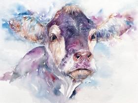 Violet vera_Cow