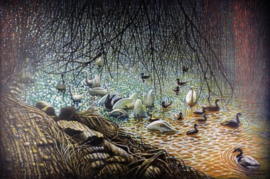 Swans & Ducks * Main photograph