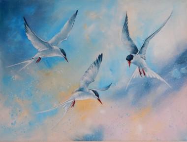 A Dance of Terns